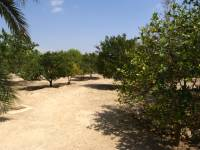 courtyard-area-finca-country-property-for-sale
